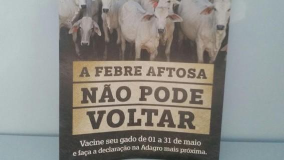 VACINA CONTRA FEBRE AFTOSA EM CEDRO PE - A FAZENDINHA