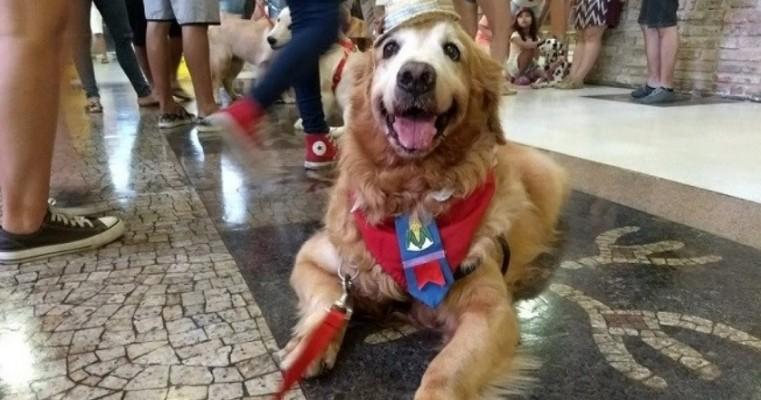 Cães vestem roupas juninas e participam de quadrilha ao som de forró no Recife