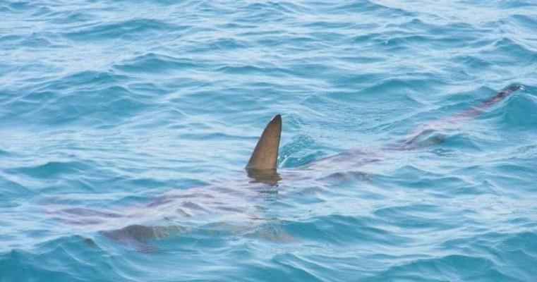 UFRPE estuda hábitos dos tubarões