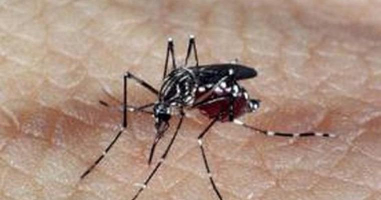 Mais de 20% dos municípios brasileiros têm risco de surto para dengue