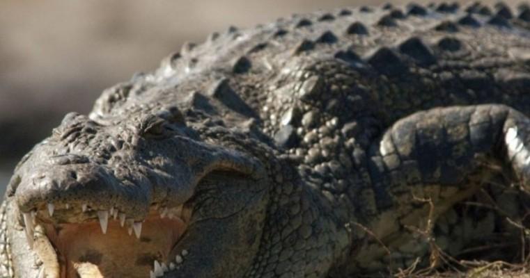Pastor é devorado por crocodilo enquanto batizava fiéis em lago