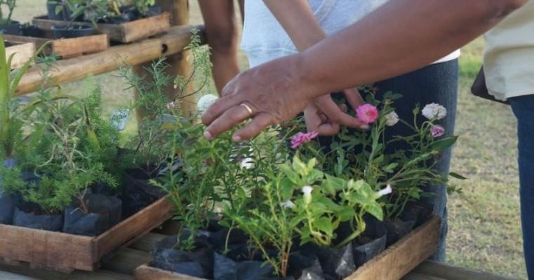 Feira promove trocas de objetos por mudas de plantas em Aracaju
