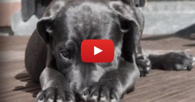 Fofo! Cão se sente ignorado e não deixa que dona use o celular; veja o vídeo