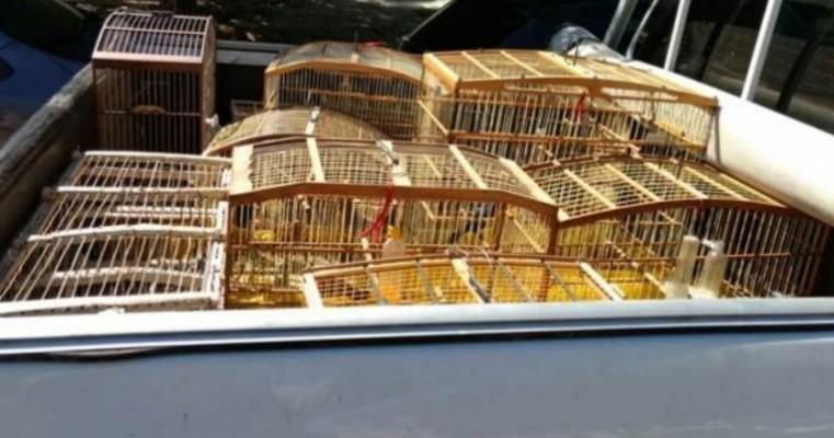 Inema e polícia apreendem aves silvestres em residencial de Juazeiro-BA