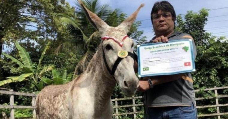 """Jumento está entre os premiados como """"prefeito nota 10 do Brasil"""""""