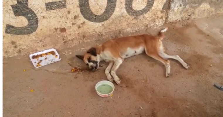 "Grupo ""SOS Defesa Animal"" resgata cadela vítima de maus tratos e precisa de ajuda para custear tratamento"