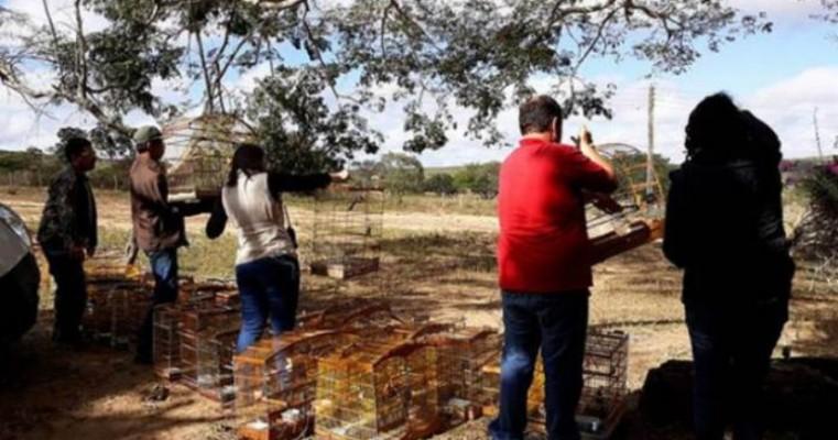 Animais raros e em extinção são encontrados no Sertão do Pajeú durante programa de fiscalização