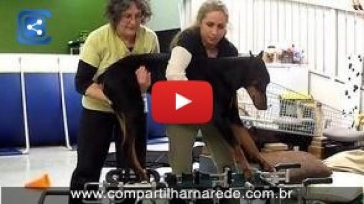 Os médicos iam sacrificar este pobre cão, mas vê o que estas mulheres fizeram