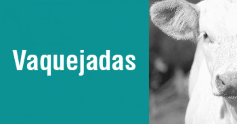 Vaquejada em Serra Talhada deve cuidar do bem-estar dos animais e da segurança do parque