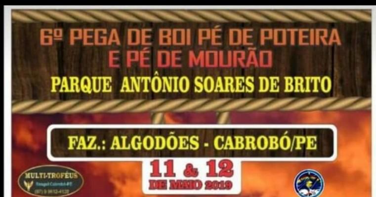 PEGA DE BOI NA FAZ. ALGODÕES- CABROBÓ-PE