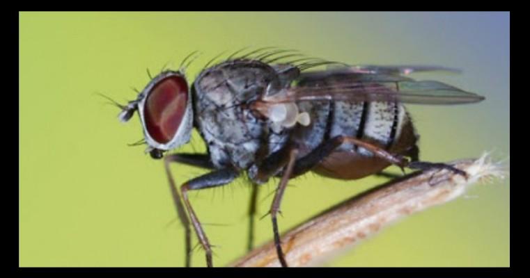 Ceará registra mais de 160 mil casos de virose da mosca no ano