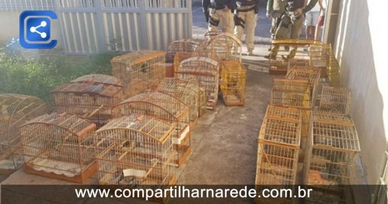 Animais silvestres são resgatados em operação conjunta em Petrolândia