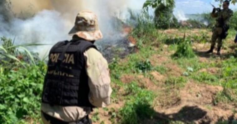 OPERAÇÃO FACHEIRO III – DELEGACIA DA POLÍCIA FEDERAL EM SALGUEIRO EVITA A PRODUÇÃO DE 120 TONELADAS DE MACONHA