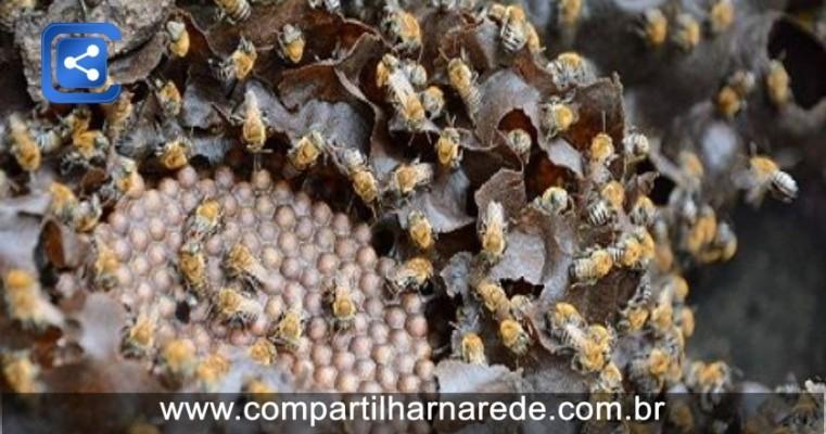 MPPE investiga morte de abelhas em Petrolina