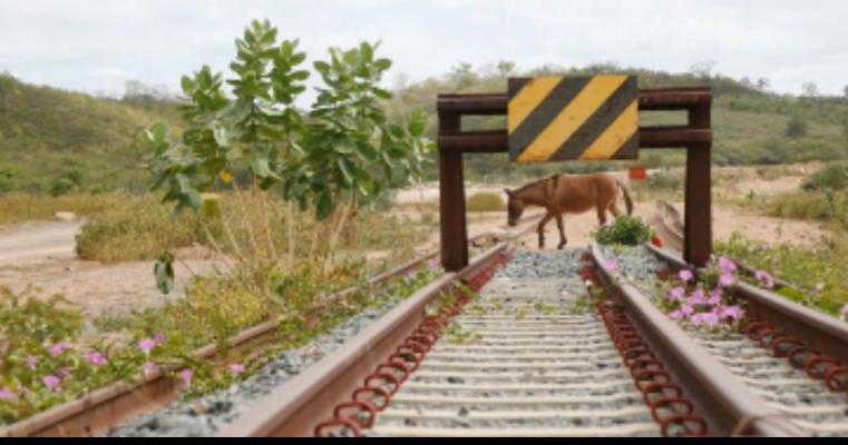 Governo Federal estuda retirar trecho da Transnordestina em Pernambuco