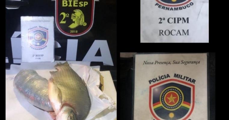 Ação conjunta das polícia 2°CIPM e BIESP resulta na apreensão de drogas em Cabrobó com destino a Petrolina