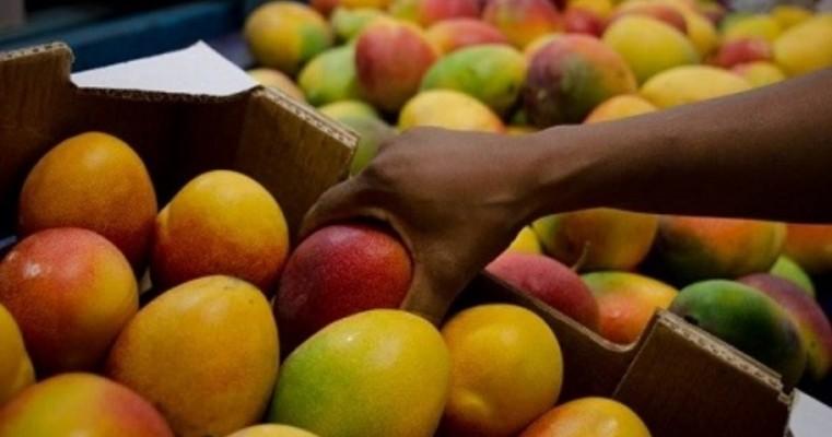 Senar-PE abre inscrições para curso técnico gratuito em Fruticultura no Polo Petrolina