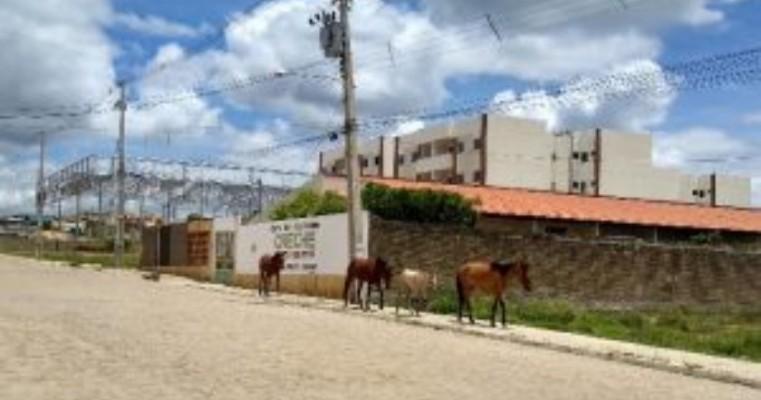 Flagrante de animais soltos na zona urbana de Salgueiro
