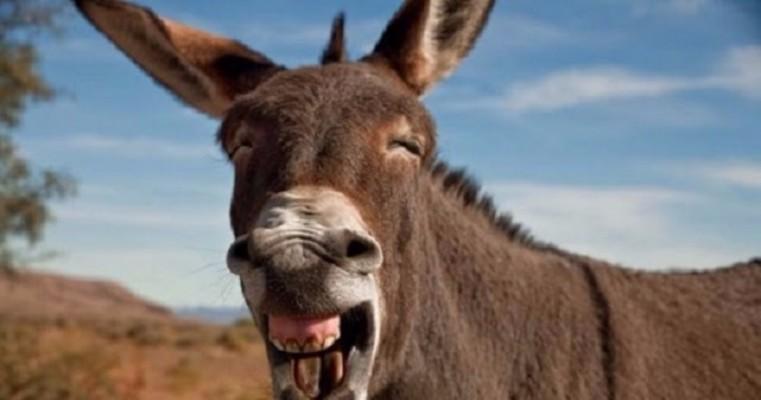 Curiosidade – relações sexuais com um burro leva quinze, entre crianças e adolescentes, a serem internados