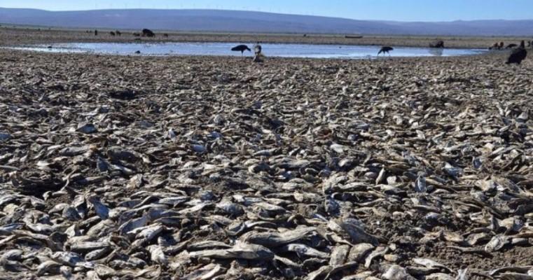 Seca mata 50 milhões de peixes na maior lagoa da Bacia do São Francisco no norte da Bahia