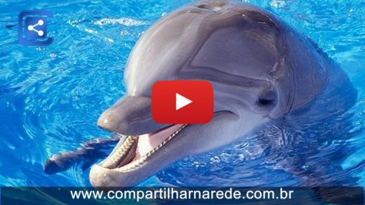 6 Fatos assustadores sobre os Golfinhos