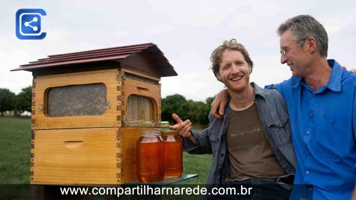 Esta colmeia inovadora deixa você colher mel automaticamente sem perturbar as abelhas