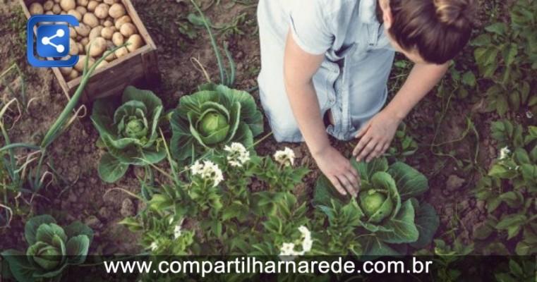 Como montar uma horta em casa para vender orgânicos