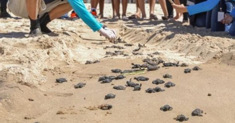 Mais de 120 tartarugas marinhas nascem